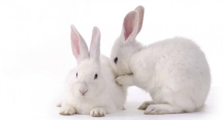 Кролик — основные характеристики и жизненный цикл + 108 фото