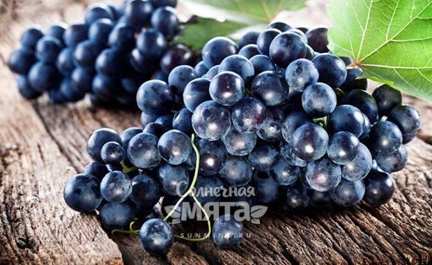 Виноград без косточек: сорта, как размножается, плюсы и минусы