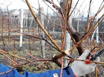 Как ухаживать за яблоней весной, в том числе в сибири, на урале, в подмосковье и др