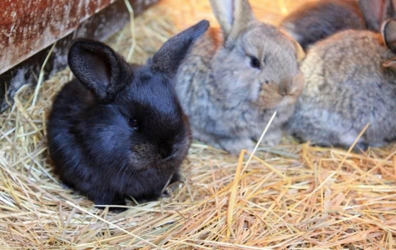 Уход за новорожденными кроликами