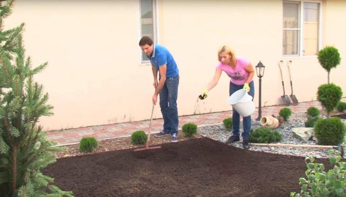 Как сделать газон на даче своими руками: пошаговая инструкция, фото, видео