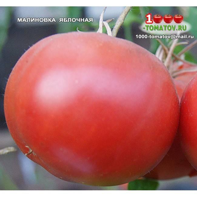 Томат малиновка — описание сорта, фото, урожайность и отзывы садоводов