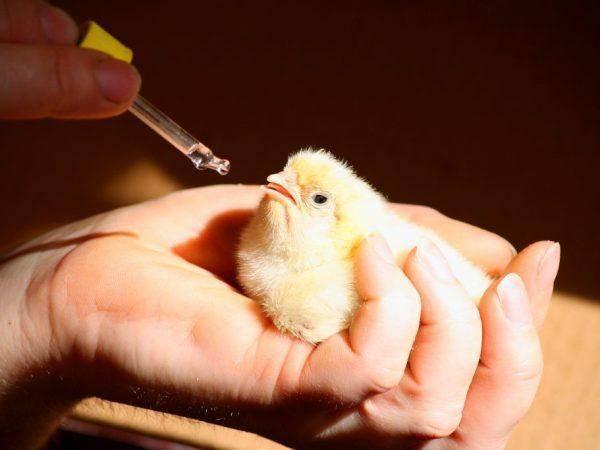 Тетравит — инструкция по применению для животных в ветеринарии