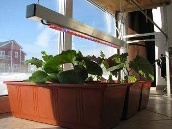 Фитолампа для растений светодиодная: правильное расположение и использование + видео как сделать своими руками