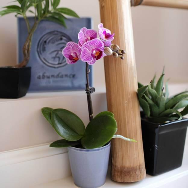 Советы о том, как ухаживать за орхидеями, чтобы цвели в домашних условиях