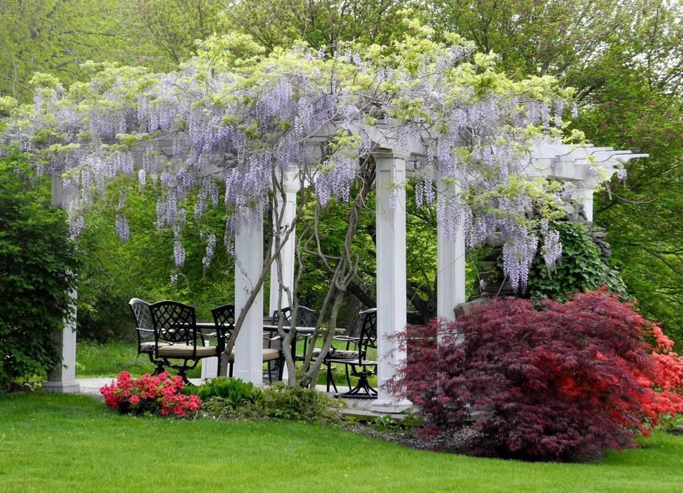 Вьющиеся растения для сада и дачи: виды цветущих однолетников и многолетников, многолетние садовые вьюны