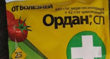 Ордан: инструкция по применению для томатов, когда можно есть помидоры после обработки, как разводить препарат от фитофторы