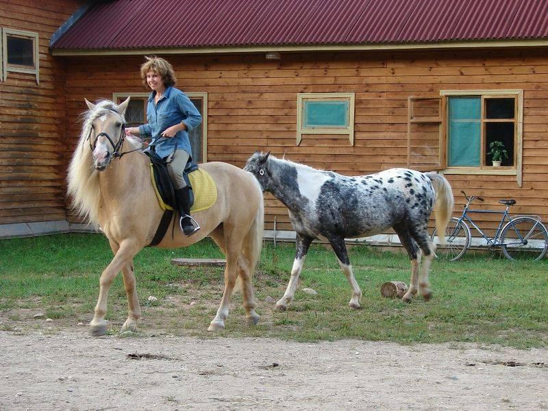 Башкирская порода лошадей: история и особенности   мои лошадки