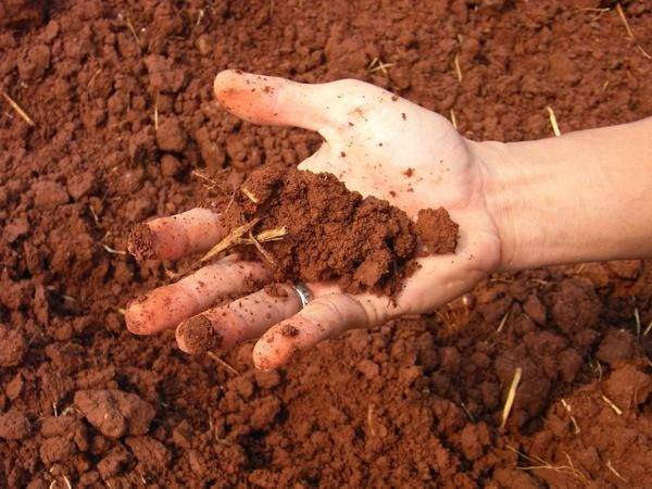Плодовые растения и овощи, которые можно вырастить в кислой почве