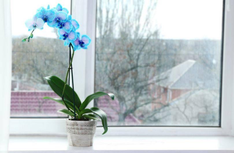 Полив орхидей в домашних условиях: способы полива орхидей