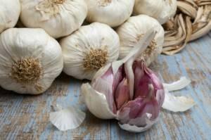 Выращивание чеснока в домашних условиях и больших масштабах: секреты получения обильного урожая