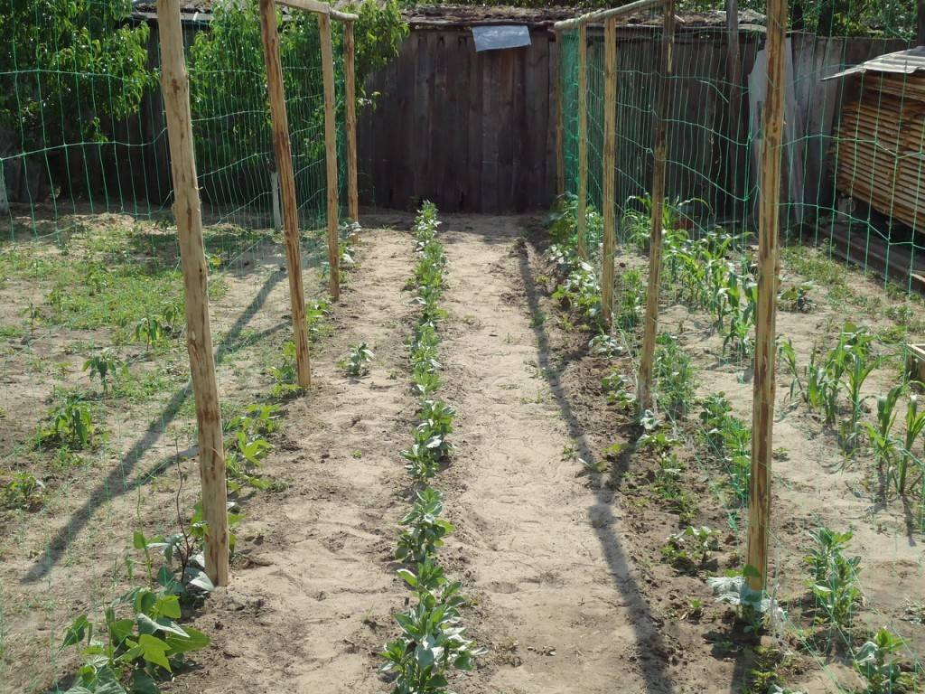 Огурцы на шпалере в открытом грунте: формирование, особенности выращивания, посадка и уход