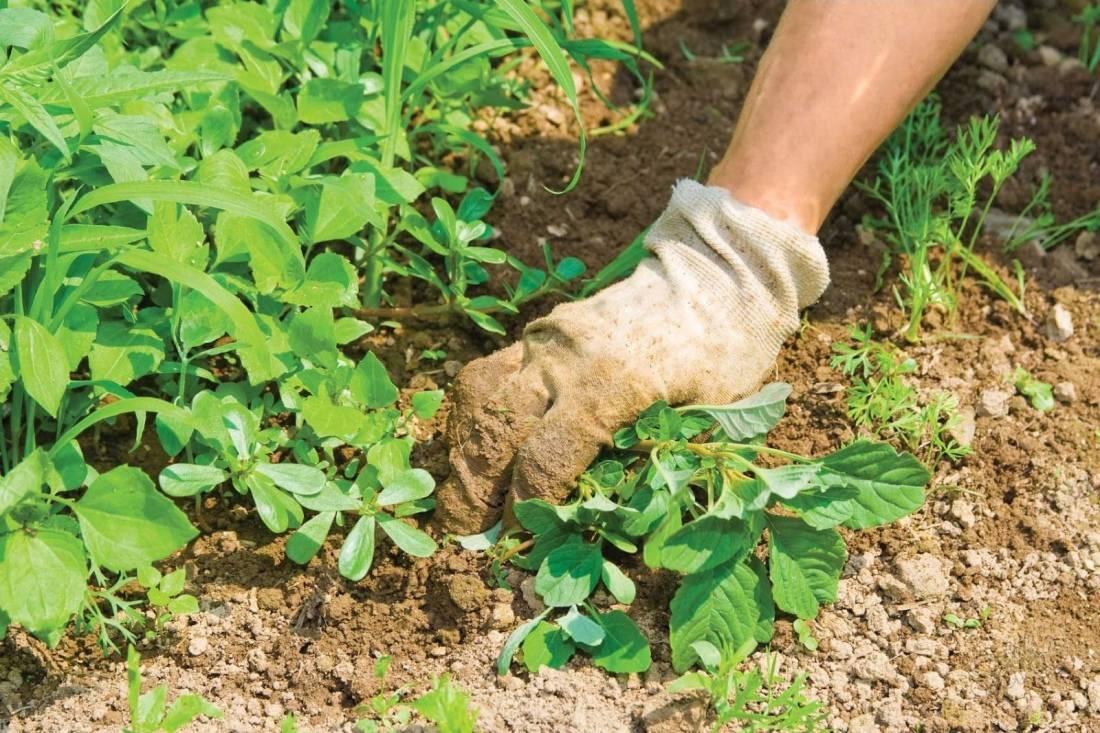 Как бороться с сорняками на огороде, лучшие методы