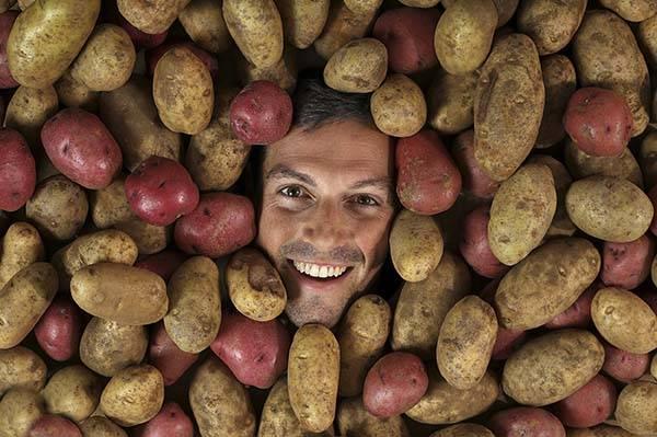 Сорта картофеля - какие сорта самые вкусные и урожайные, лучшие ранние и поздние сорта
