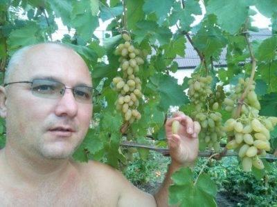 Сорт винограда кишмиш: всё о сорте, секреты, посадка, уход