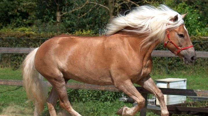 Масти лошадей:названия и фото  | мои лошадки
