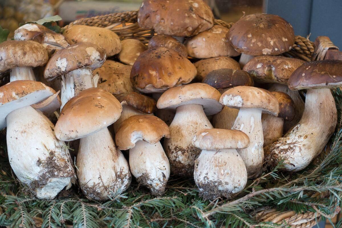 Как правильно чистить разные виды грибов дома