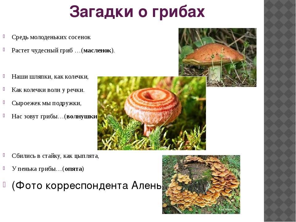 Ежовик гребенчатый и еще 9 удивительных съедобных грибов, которые растут в россии