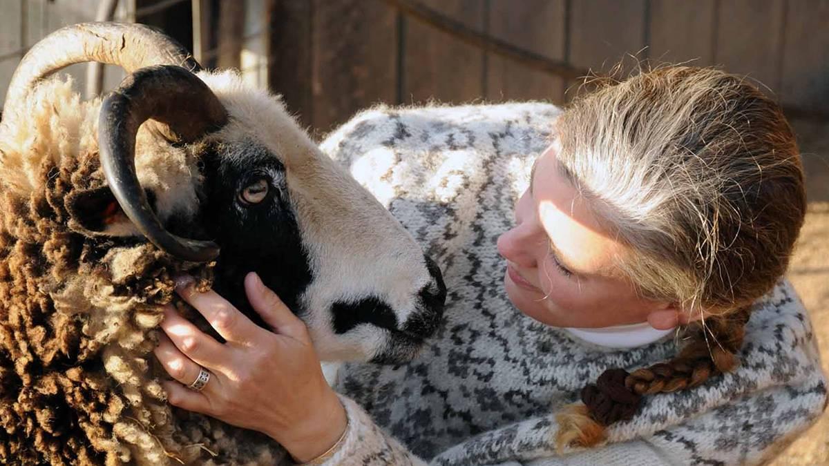 Разведение овец и баранов в домашних условиях как бизнес: советы и рекомендации