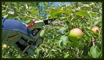 Почему яблоня не цветет и не плодоносит — причины и что делать