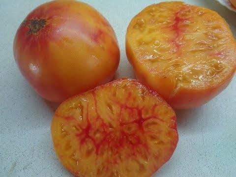 """Томат """"персик"""": характеристика и описание сорта, отзывы, фото"""