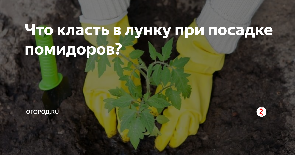 Высадка рассады томатов в теплицу. что и как добавить в лунку при высадке рассады?