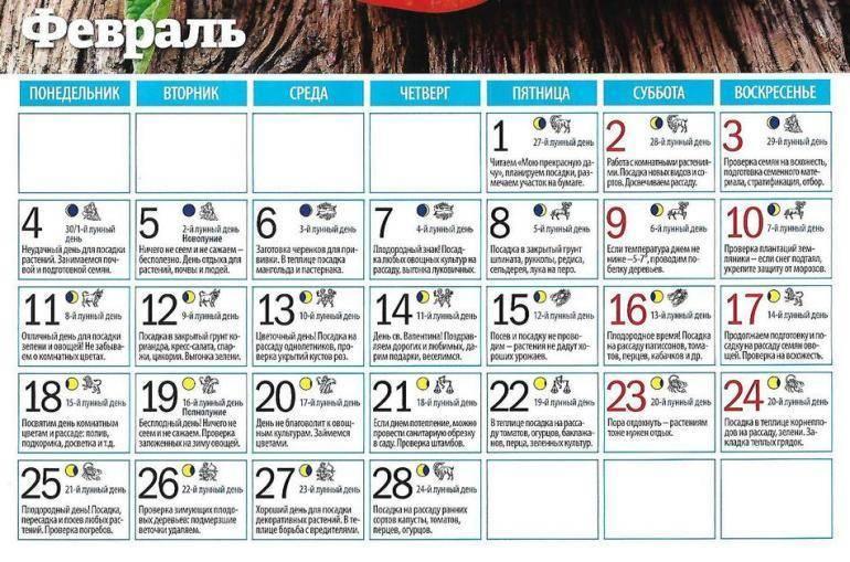 Лунный календарь для посадки кабачков в 2019 году — selok.info