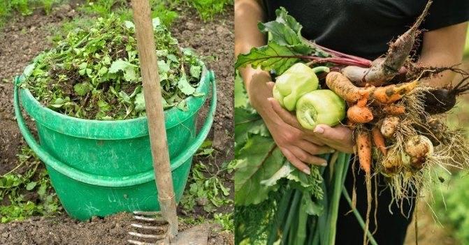 Как приготовить травяной настой для подкормки растений: правильный рецепт и применение зеленого удобрения