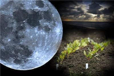 Луна в скорпионе | гороскопы 365