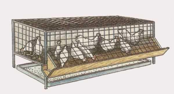 Как сделать клетки для кур и цыплят своими руками: размеры, чертежи конструкции