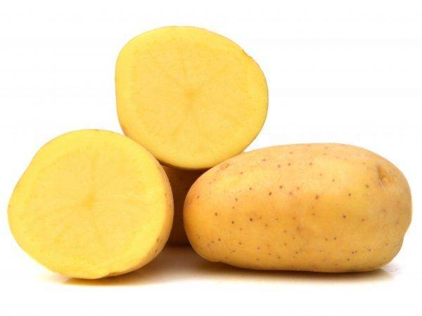 Характеристика картофеля агата - агро журнал pole39.ru