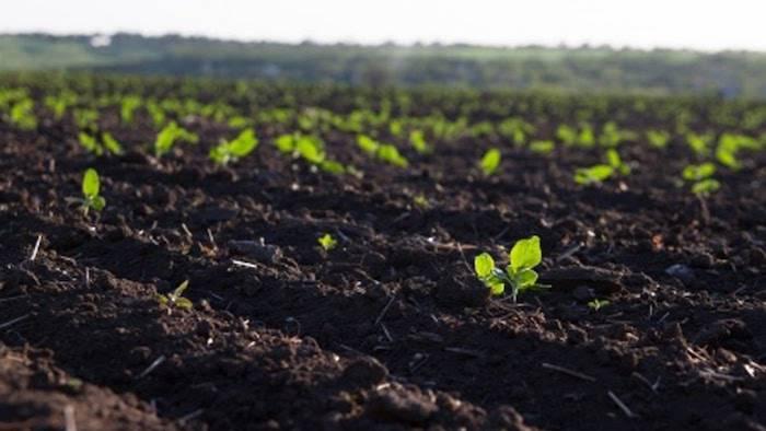 Раскисление почвы: чем и как ее раскислить в домашних условиях? раскислитель для огорода. чем понизить кислотность в горшке с растением?