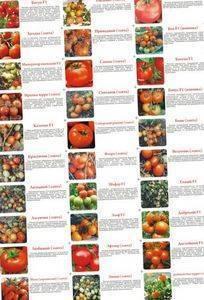 Наиболее популярные сорта помидоров для открытого грунта