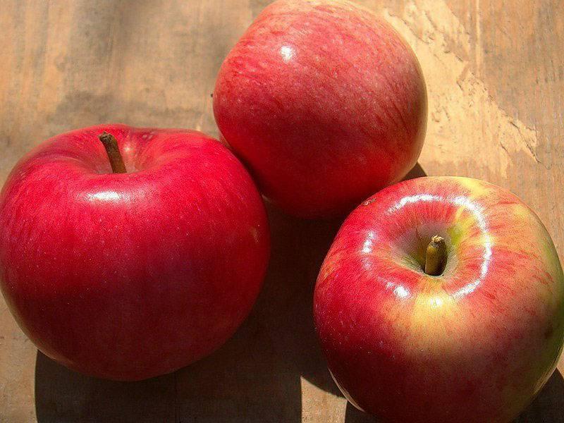 Яблоня малиновка: знакомим с вопросом