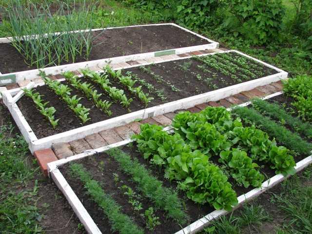 Высокие грядки игоря лядова: как сделать умный огород своими руками (плюсы и минусы, дизайн грядок, фото)