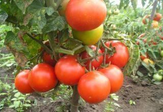Семена томат f1 звезда востока: описание сорта, фото. купить с доставкой или почтой россии.