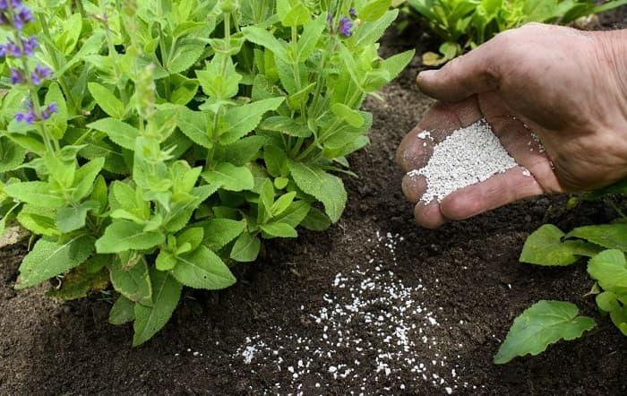 Применение мочевины (карамбида) на огороде как удобрения для клубники, огурцов и других культур