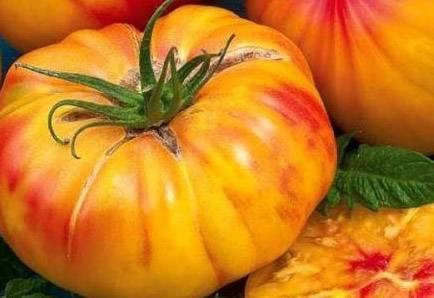 Описание томата медовый салют - мыдачники