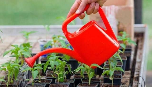 Помогает ли перекись водорода от фитофторы? как обработать томаты и когда можно снимать урожай?