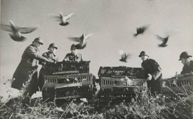 Как работает голубиная почта