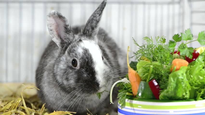 Витамины и минералы для кроликов: для декоративных, пушных, мясных, какие и в каком количестве нужны, в каких продуктах найти