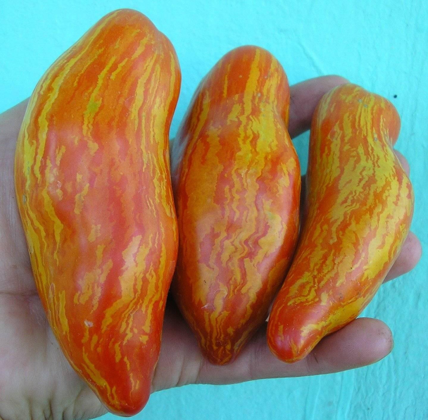 Красный, желтый, полосатый, или все, что вы должны знать о перцевидных томатах