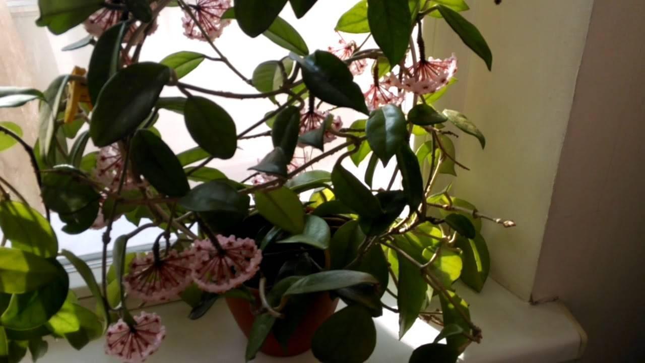 Как заставить домашние цветы зацвести в квартире