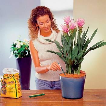 Как правильно ухаживать за комнатными растениями: правильный уход за домашними цветами - стэл-инвест