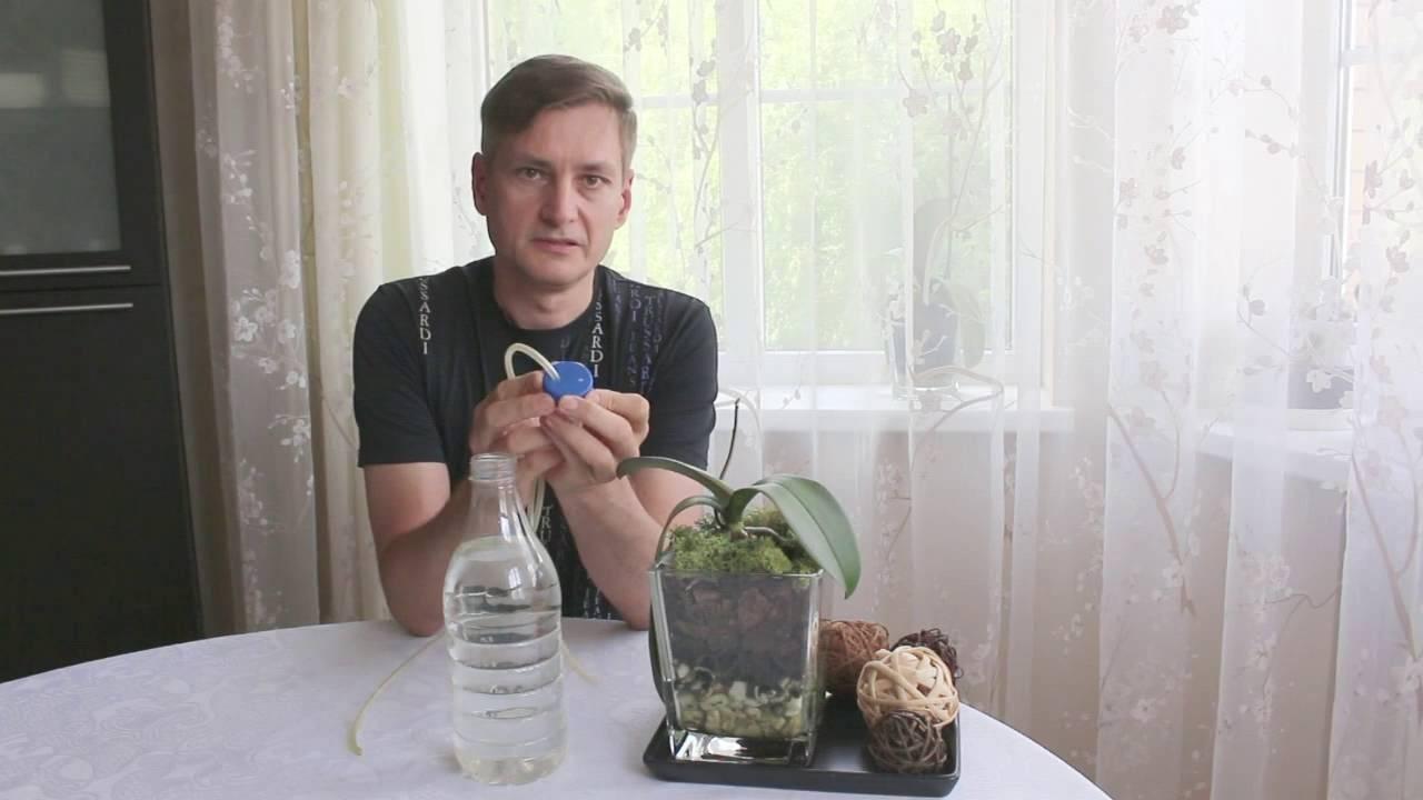 Простое выращивание орхидей в стеклянных горшках (вазах)