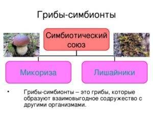 Грибы – короли симбиоза — xren.su