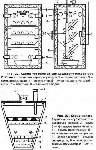 Инкубатор для перепелов: как сделать своими руками и как выводить перепёлок