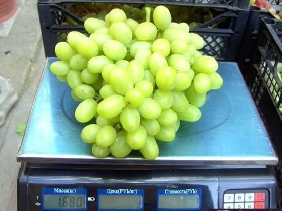Виноград ландыш — новый сорт с отличным вкусом. основные характеристики, преимущества и недостатки сорта