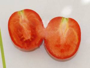 Томат касатик: описание сорта, особенности выращивания с фото