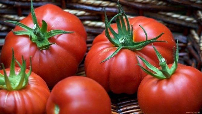 Томат толстой: топ отзывы, важные секреты выращивания, описание